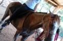 Localizado cavalo da Apae