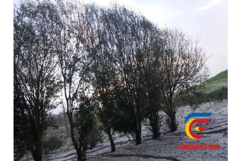 Foto: www.campoere.com/Redes sociais