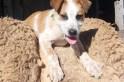 Procurado – Cãozinho foge de casa e familia procura por ele