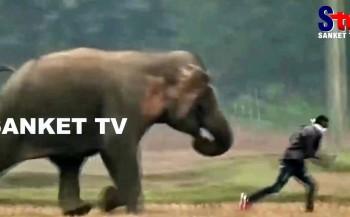 Por pouco – Turista tenta fazer selfie e elefante não gosta